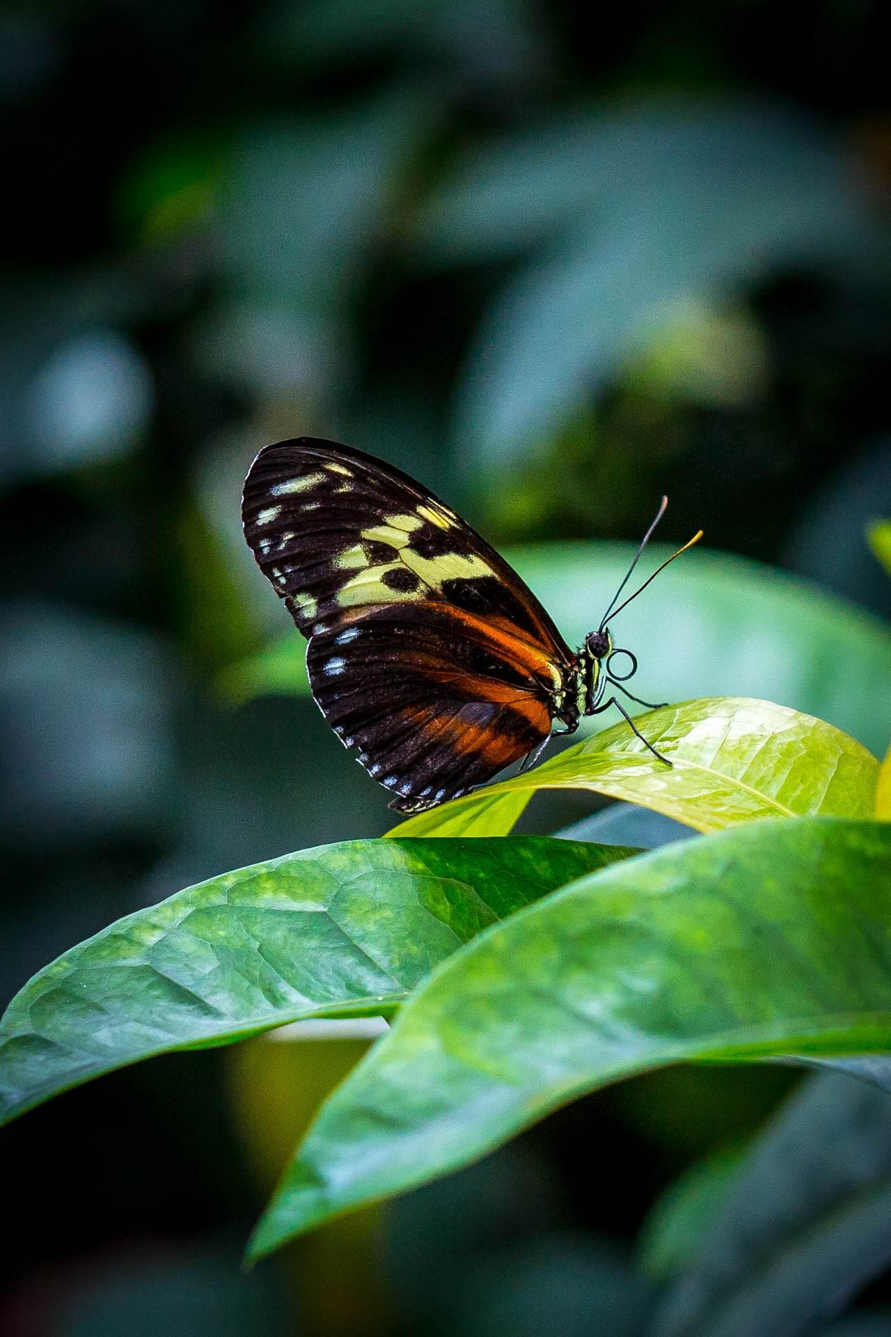 Resting Butterfly - butterfly, butterfly pavilion, colorado by D Scott Smith