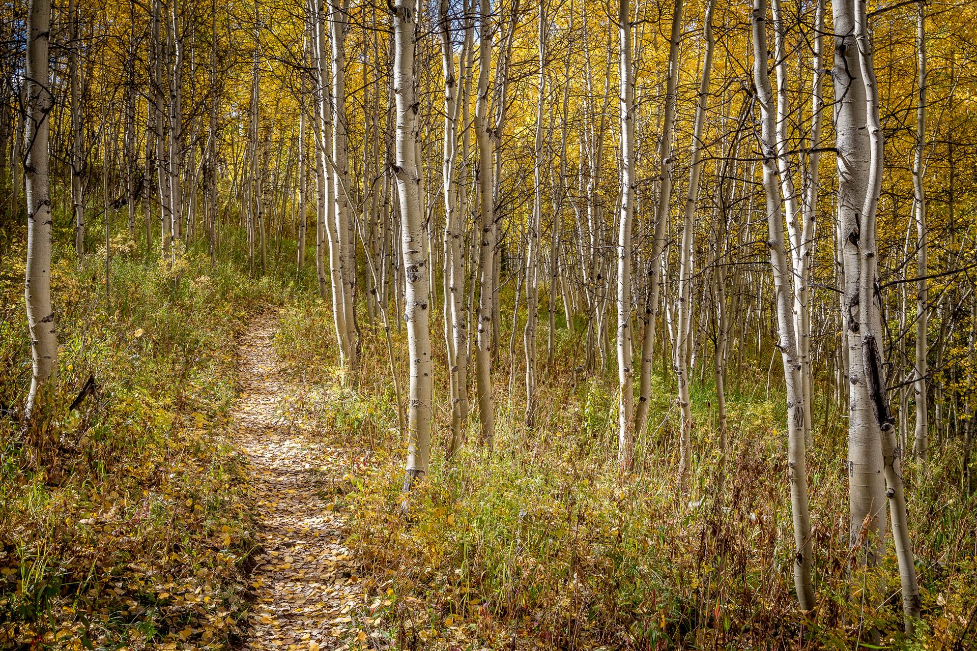 Hiking on Rim Trail -  by D Scott Smith