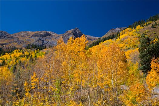 A quick shot of the aspens from the million dollar highway between Ourway and Silverton, Colorado.