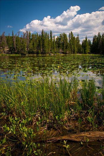 Preview of Nymph Lake