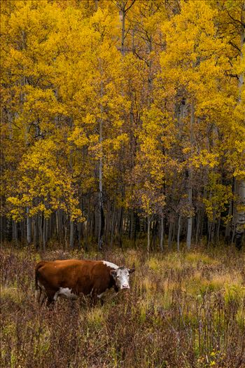 Fall Grazing -