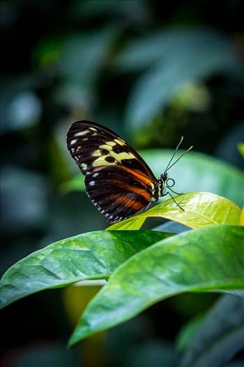 butterfly, butterfly pavilion, colorado