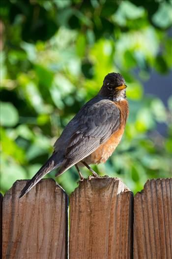 Description of spring bird.