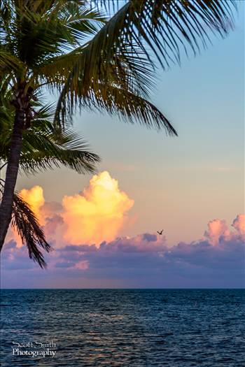 The sun sets as a gull flies by - from the Waldorf Astoria's Casa Marina in Key West, Florida.
