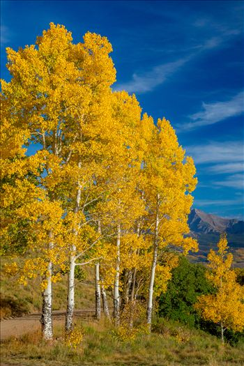 Aspens line a mountain pass on Last Dollar Road, Telluride.