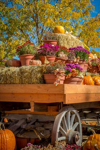 A wagon full of fall flowers and pumpkins - from Anderson Farms, Erie Colorado.