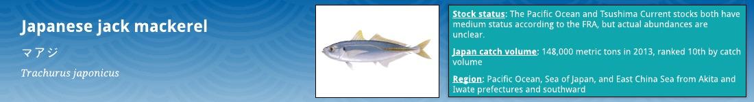 Japanese jack mackerel