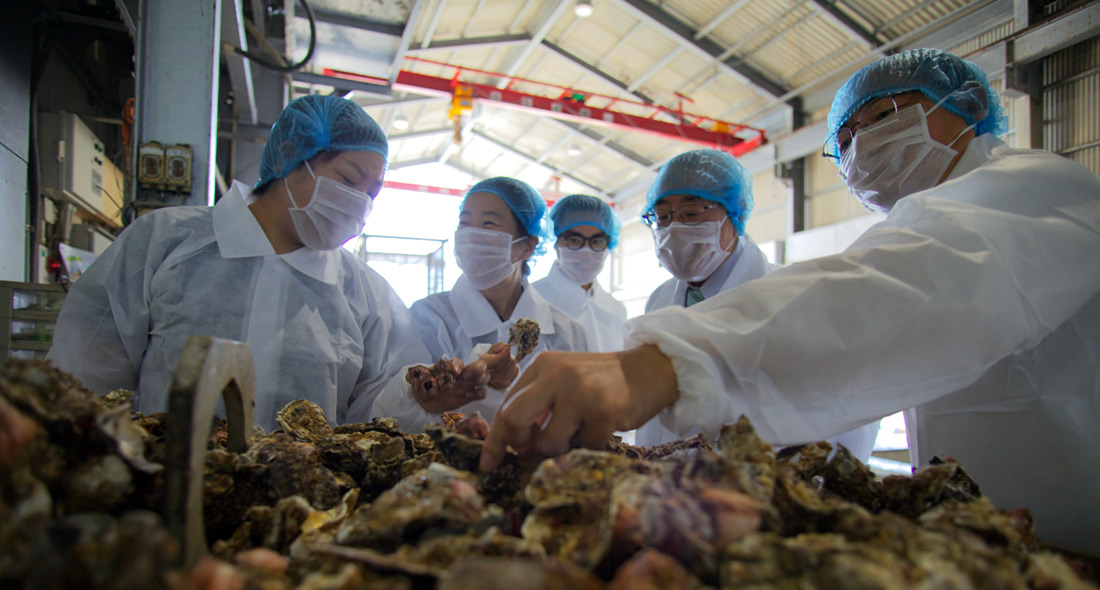 Hiroshima FIP oyster production