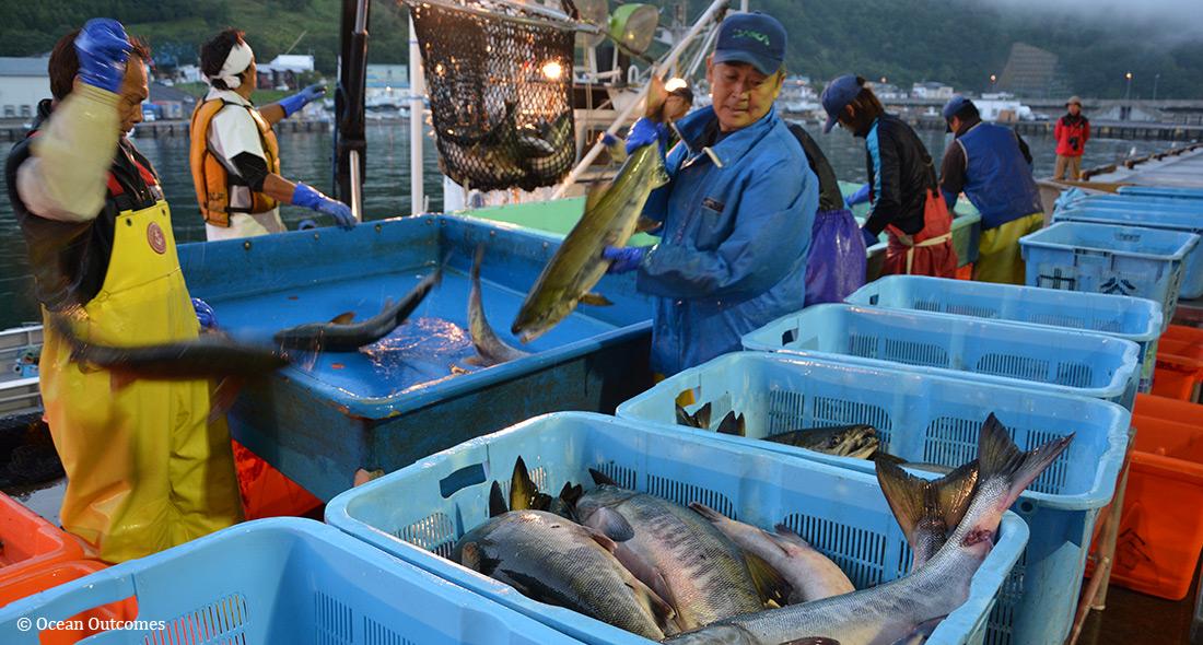 世界最大のシロサケ漁業を再展望する