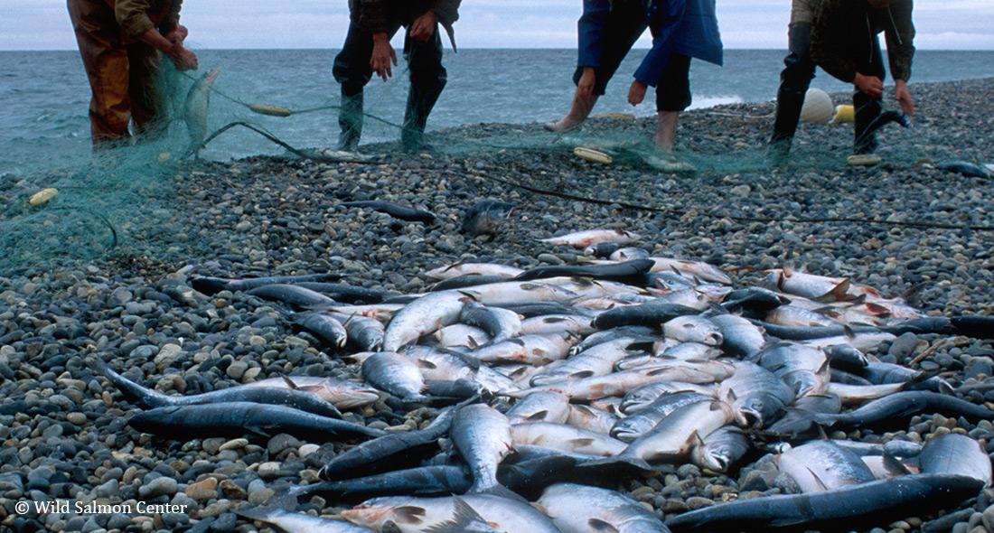 極東ロシアにおける密漁撲滅に向けて