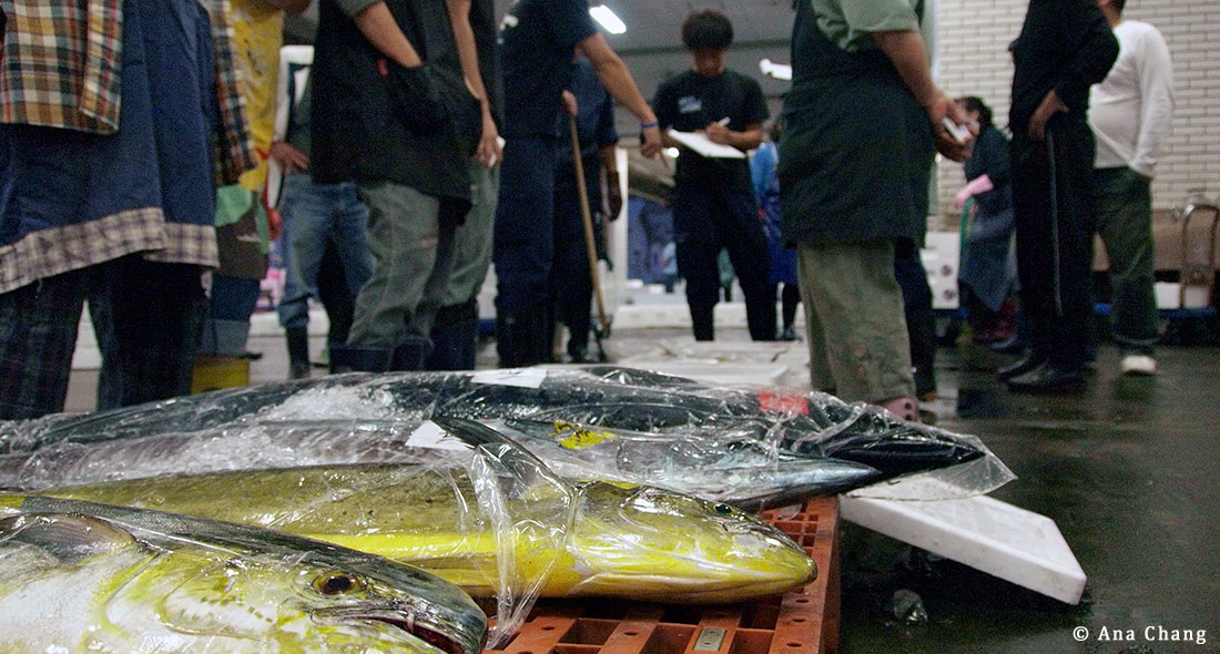 New Study Reveals High Risk of Illegal Seafood Imports Entering Japanese Market