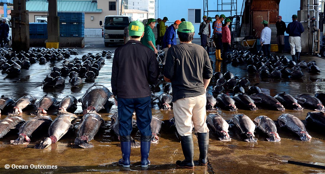 Japan Looks to Improve Key Tuna Fisheries as Part of Blossoming Sustainable Seafood Movement