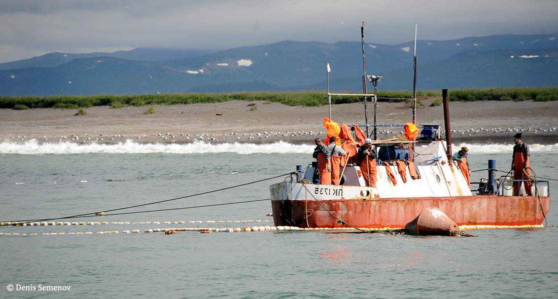 Fishery Improvement Efforts Lead to New Management Strategies in Kamchatka