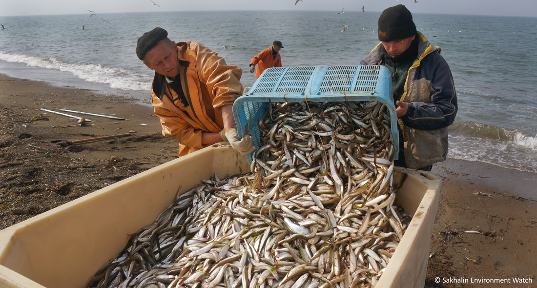 Record Catches and Increased Seafood Harvest in Russia