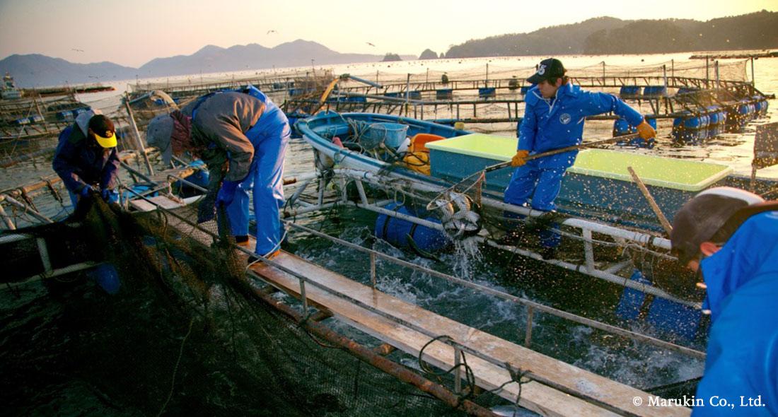 西友、日本初の養殖漁業改善プロジェクト「宮城女川銀鮭 AIP」への 支援実施を決定