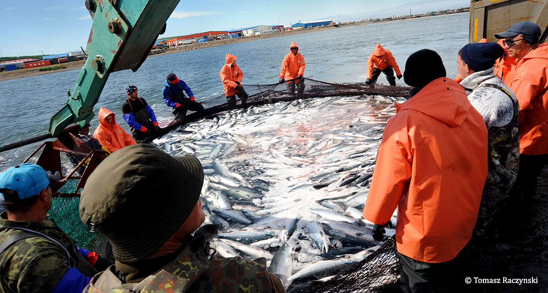 West Kamchatka Salmon Fisheries Near MSC Sustainability Certification