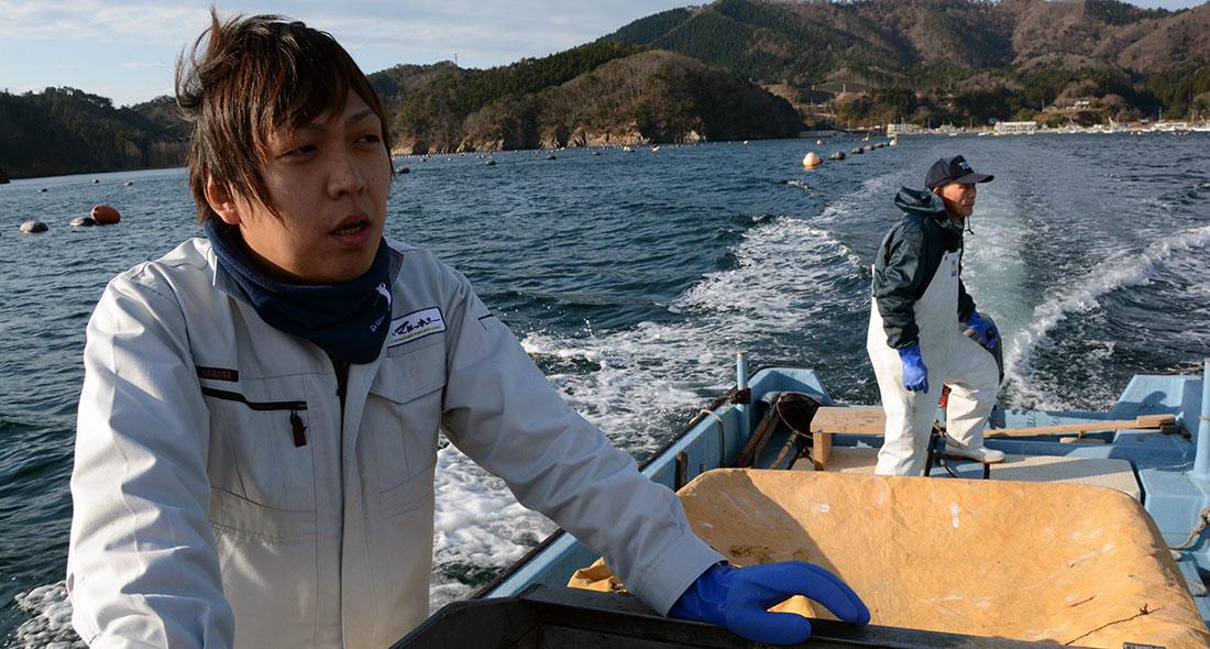 Miyagi Onagawa Coho Salmon AIP