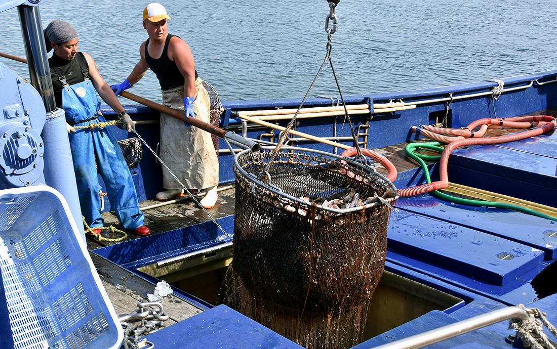 Tokyo Bay sea perch fishermen
