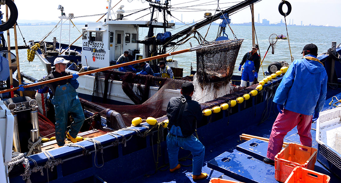 Tokyo Bay sea perch fishing