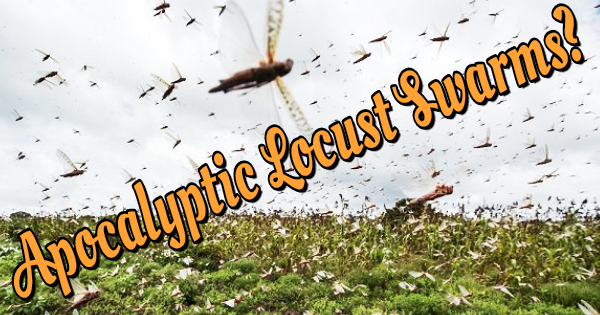GROWING APOCALYPTIC LOCUST SWARMS THREATEN AFRICAN NATIONS