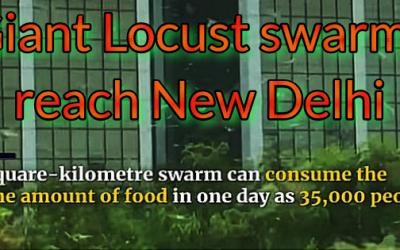 GIANT LOCUST SWARMS REACH INDIA'S CAPITAL CITY