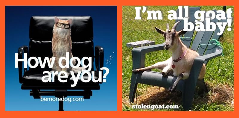 be more dog - be more goat