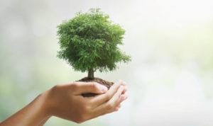 Tree of Suatainability