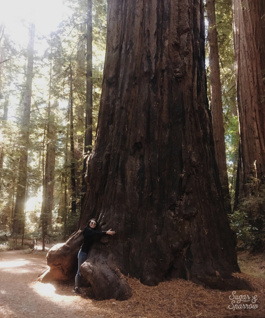 hugging trees in the avenue of the giants