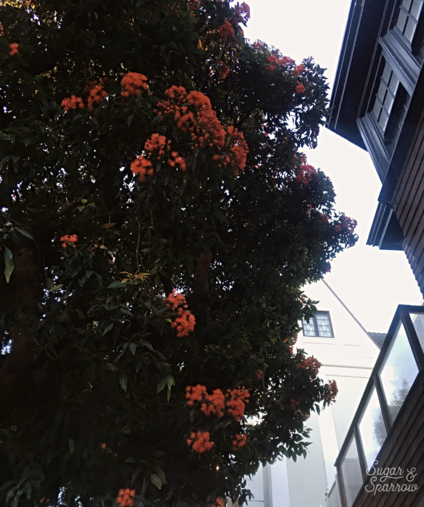 san francisco foliage