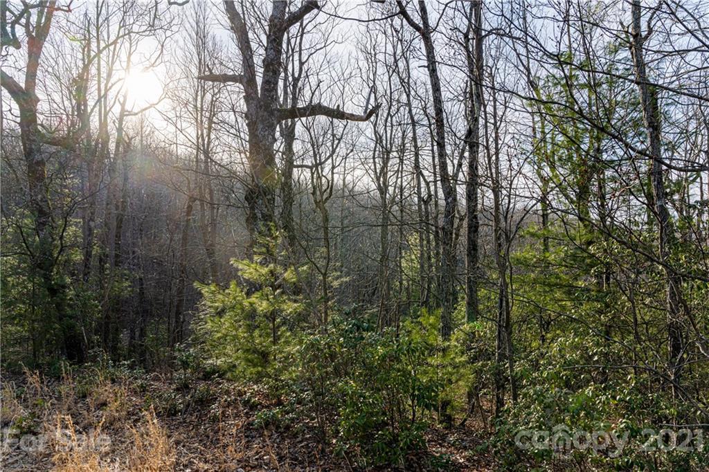 167 Shoal Creek Road