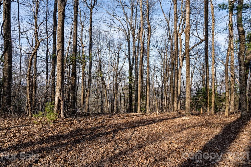 360 W. Chestnut Ridge