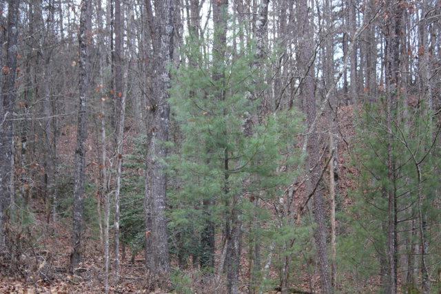 6033 Grassy Branch