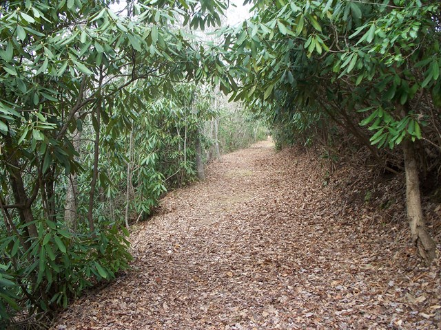 18-1 Caroline Trail