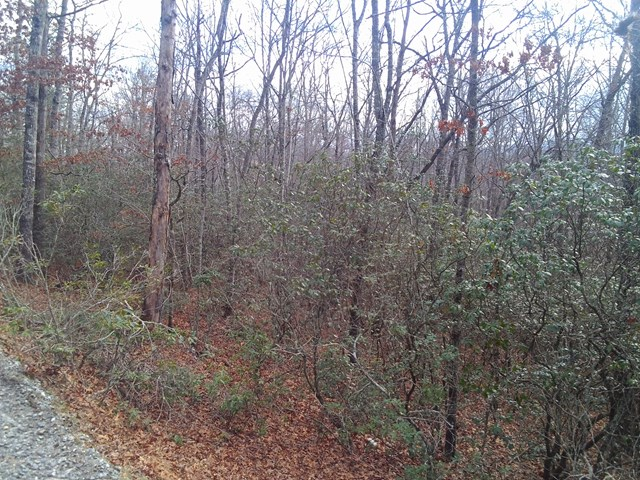 00 Whispering Woods Rd