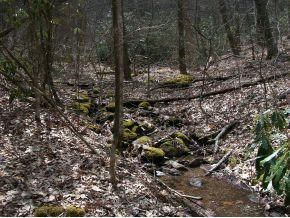 Lot 45 Woodchuck Trail