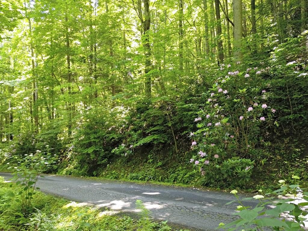 0 Forest Run