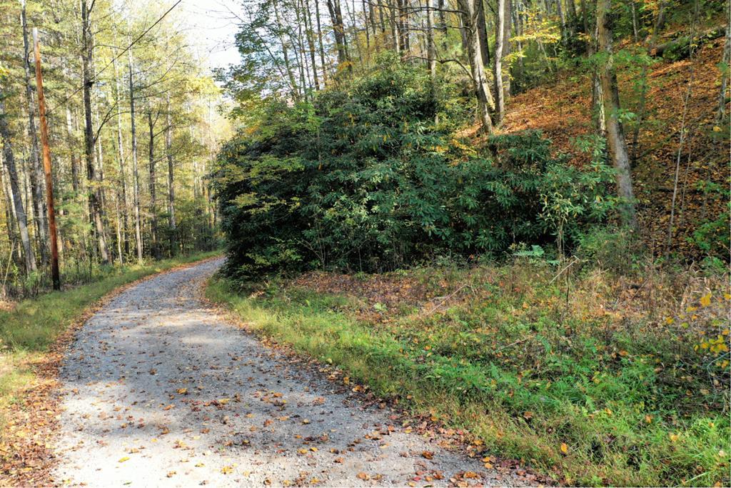 VL63 Mtn Forest Estates