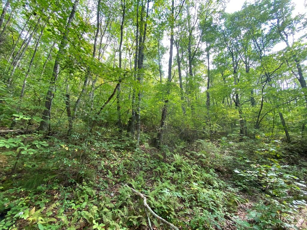 Lot 1 Shiver Ridge