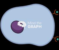 Adjacent target cell 2
