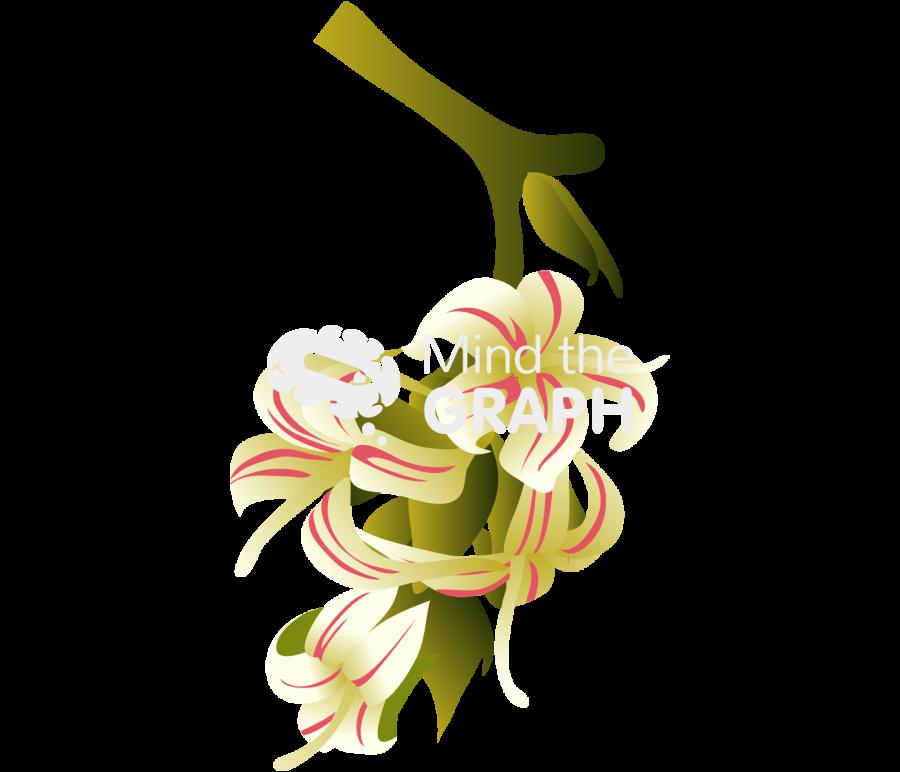 anacardium occidentale cashew flower