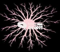 Astrocyte 1