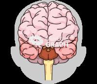 Immature brain shape front