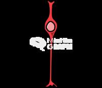 Bipolar cell retina 1