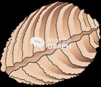 Bivalve mollusk closed