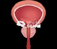 Bladder prostate health front cut