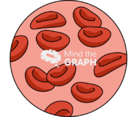 Blood cells zoom