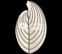 Brachiopod 1 side