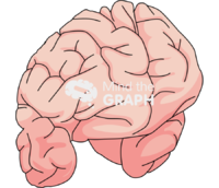 Brain cut anterior perspective view