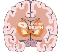 Brain section 1