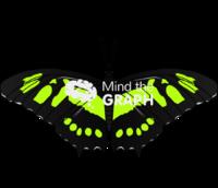 Butterfly rhopalocera 2 dorsal